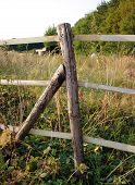 Log Fence Post