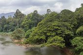 River In The Botanical Garden Of Peradeniya