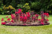 foto of royal botanic gardens  - botanical Garden of Peradeniya Kandy - JPG