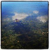 Gator in water - instagram effect