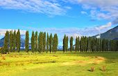 Along green fields avenues of cypresses grow. Rural areas in the Chilean Patagonia. Mountain range is visible in the distance