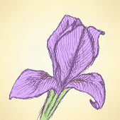 Sketch Iris, Vector Vintage Background
