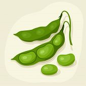 Stylized vector illustration of fresh ripe bean pods.