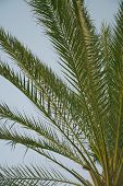Palm branches closeup