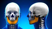 Male Mandible Bone Skull Anatomy - Blue Concept