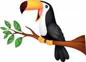 stock photo of toucan  - illustration of Cute toucan bird cartoon isolated on white - JPG