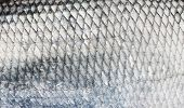 Asp fish scales, natural texture
