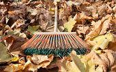 autumn leaves and rake