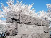 Washington Cherry Blossoms Near Franklin Roosevelt Memorial 2010