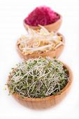 pic of soybean sprouts  - sprout - JPG