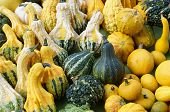 squash of various shapes and sizes