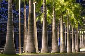 picture of singapore night  - palm trees alley illuminated by night in Singapore city - JPG