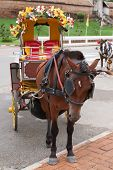 Horse Drawn Carriage In Lampang; Thailand