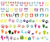 shoeprint, footprint, animal and bird trails
