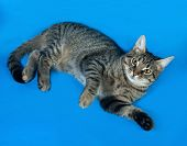 pic of yellow tabby  - Tabby kitten with yellow eyes lying on blue background - JPG