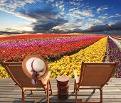 stock photo of buttercup  - Two deck chairs on the platform are at the colorful flower fields - JPG