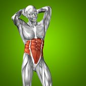pic of human muscle  - Concept or conceptual 3D chest human anatomy or anatomical and muscle on green gradient background - JPG