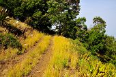 pic of vegetation  - Dirt road cuts through the mountaintop on the island of Fogo filled with lush vegetation - JPG