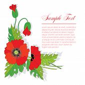 picture of bouquet  - bouquet of poppies - JPG