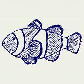 image of clown fish  - Tropical reef fish - JPG