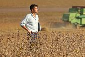 foto of soybeans  - Conceived young businessman standing on soybean field during harvest - JPG