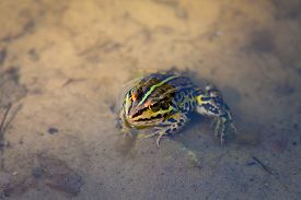 pic of cute frog  - Little curious cute frog in forest river - JPG