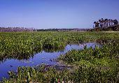 Marsh-Clearing