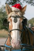 stock photo of blinders  - Merry horsemas - JPG
