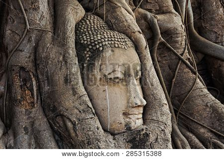 poster of Buddha Head In The Root Trees.head Of Sandstone Buddha In The Tree Roots At Wat Mahathat, Ayutthaya,