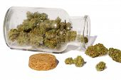 Marijuana. Glass Jar filled with Marijuana Buds. Cannibals Sativa buds in a glass stash jar. Isolate poster
