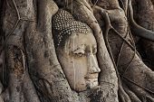Buddha Head In The Root Trees.head Of Sandstone Buddha In The Tree Roots At Wat Mahathat, Ayutthaya, poster