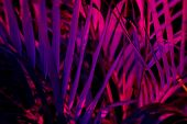 Tropical Blurred Leaf Forest Glow In The Black Light Background. High Contrast. poster