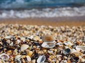 Shore Shell Beach On The Azov Sea. The Engagement Ring In The Shell Of The Shell poster