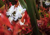 White Natural Blooming Chrysanthemum Ornamental Flower Floral Bouquet Arrangement In Vase Background poster