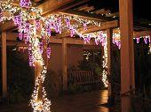 Grape Arbor Of Lights