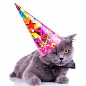 big english party cat wearing a party hat and bow tie on white background