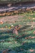 Detailed View Of A Single Funny Rodent, Prairie Dog, Genus Cynomys, On Park Grass poster