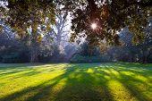 Park Of Castle Of Chenonceau