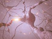 Neuron Concept