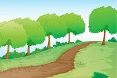 Deta-lles de un camino en la naturaleza verde