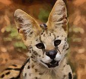 Serval African Wild Cat Portrait Vector