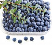 blueberry in plastic container box  isolated over a white