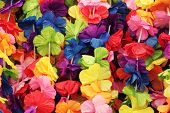 Hawaii flowers background