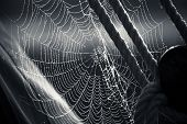 stock photo of spiderwebs  - Morning dew on Spiderweb a sailboat detail - JPG