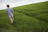 Rear view of a man walking in tilt field