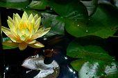 Lotus 1 - Color