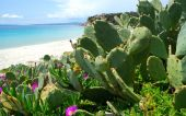 cactus plant on the beach