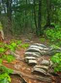 image of knoxville tennessee  - View of a mountain ridge trail at House Mountain Knoxville Tennessee - JPG