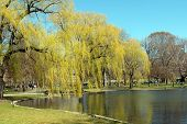 Park With Willow Tree And Pond