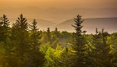 Pine Trees And Distant Mountains At Sunrise, Seen From Bear Rocks Preserve, Monongahela National For